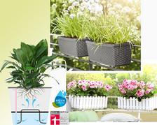 Blumen- & Pflanzenpflege