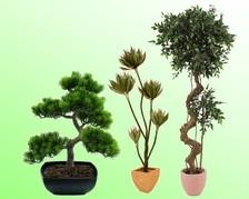 Formale Pflanzen