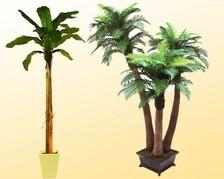Palmbäume mit Stämmen