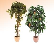 Pflanzen mit Früchten