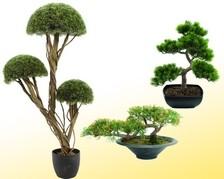 Pflanzen Nadelbäume