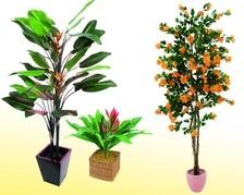 Pflanzen mit Blüten