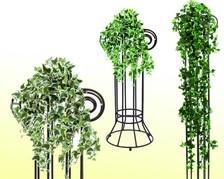 Ranken, Büsche, Hängepflanzen